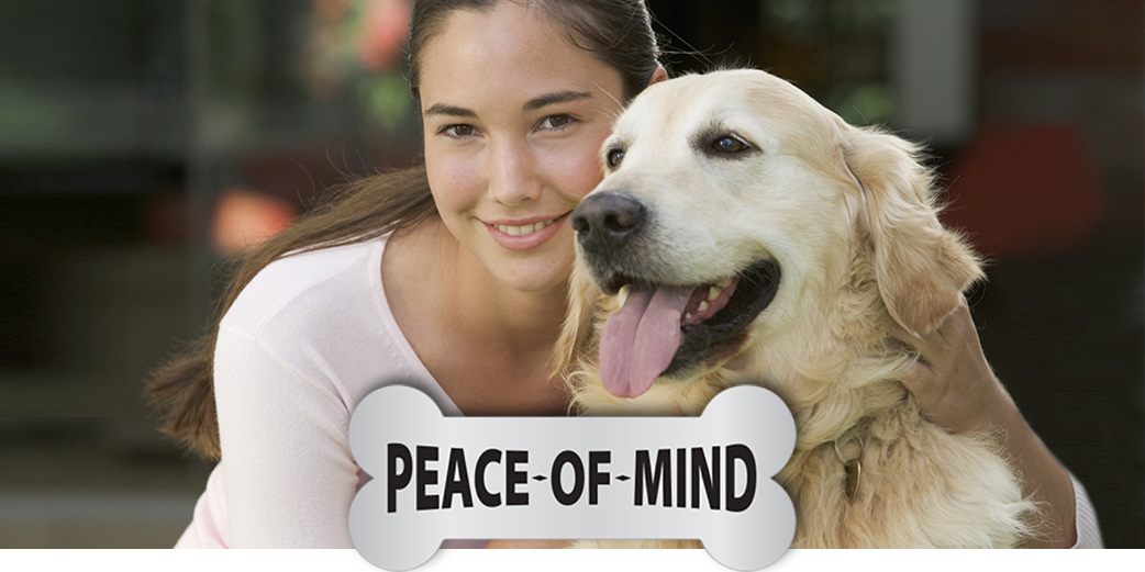 Peace Of Mind: A pet proof home is essential to enjoy a long happy life with a dog or a cat.