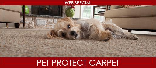 Web Special - Pet Protect Carpet
